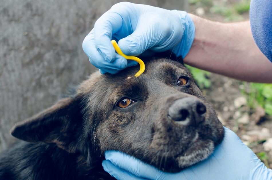 Удаление клещей у домашних животных в Перми: цены, отзывы и адреса